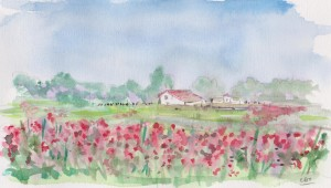 field of poppies 001 (1)
