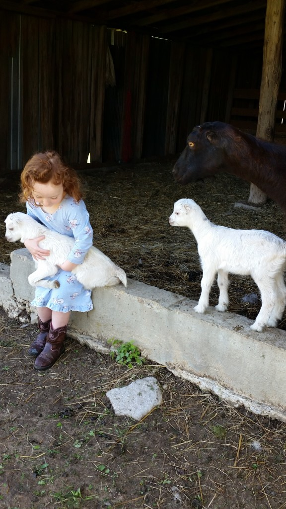 amelia and goats